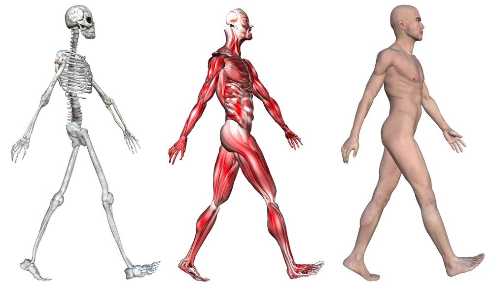 kl anatomie fysiologie pathologie - lesmateriaal