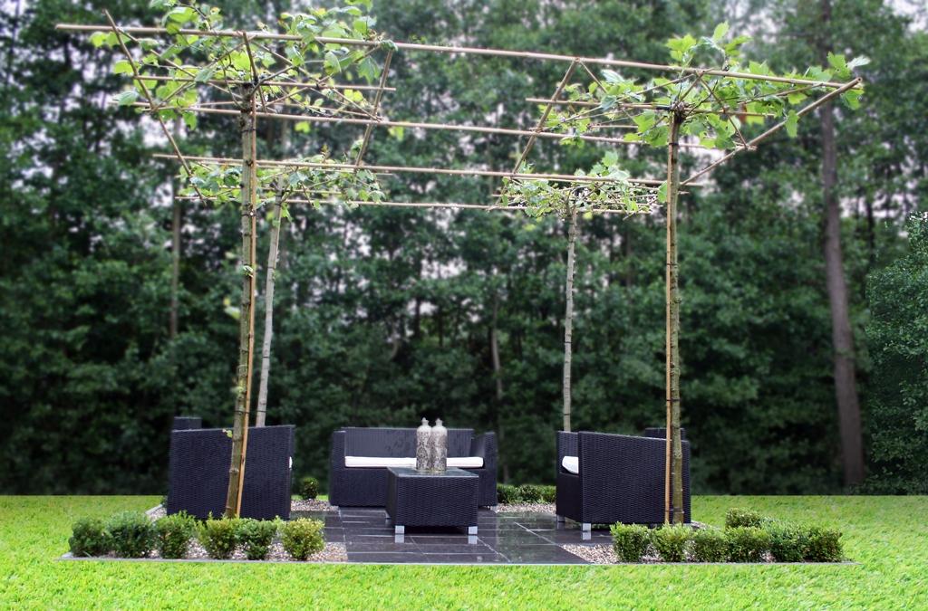 Parasolboom In Tuin : Leibomen en modelsnoei lesmateriaal wikiwijs
