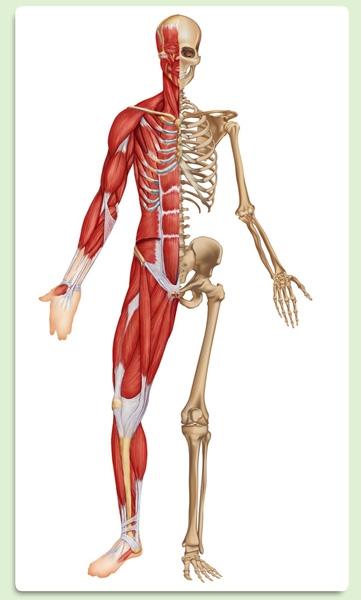 Wonderlijk Webquest het menselijk lichaam - Lesmateriaal - Wikiwijs KN-93