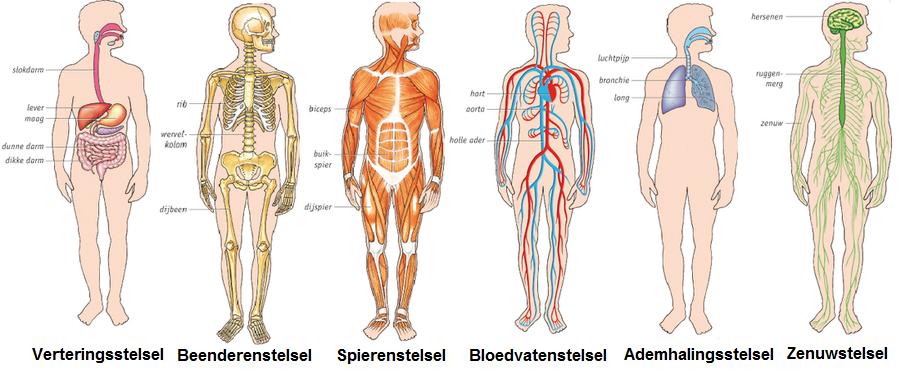 wat doet havermout met je lichaam