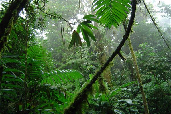 Costa Rica Amazing Tours
